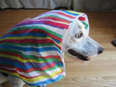 zoeribbonscarf.jpg